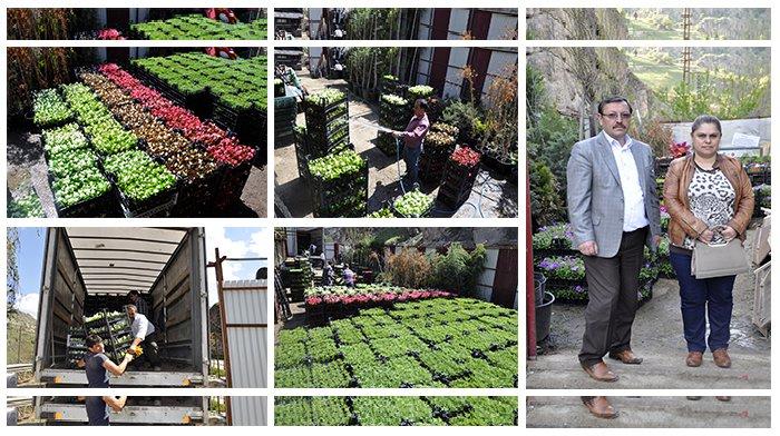 Belediye, çiçek dikim çalışmalarına başladı